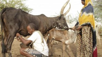 Food security in Greater Horn of Africa threatened by poor rainfall