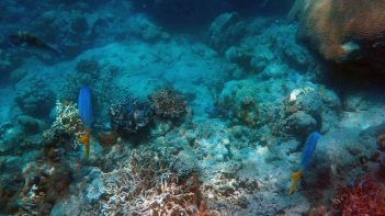 Calls for deep seabed mining moratorium grow in face of growing international concerns