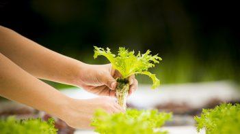 IREP launches new Agri-Tech venture